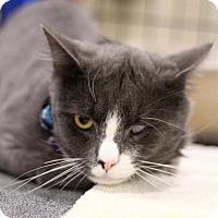 Adopt A Pet :: Moody - Sacramento, CA