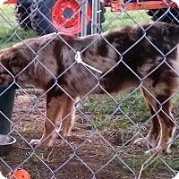 Adopt A Pet :: Rebel - Waller, TX