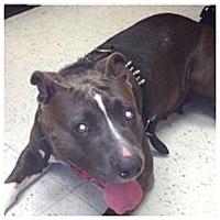 Adopt A Pet :: Tiara (COURTESY POST) - Baltimore, MD