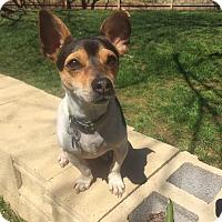 Adopt A Pet :: Ruthie - Homewood, AL
