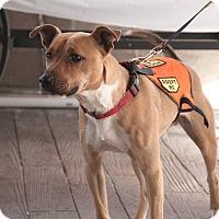 Adopt A Pet :: River - Pottstown, PA
