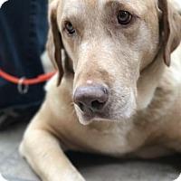 Adopt A Pet :: Delvin - Denton, TX