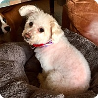 Adopt A Pet :: Carly - Munster, IN