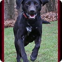 Adopt A Pet :: Gimli - Shippenville, PA
