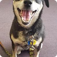 Adopt A Pet :: Elle - West Des Moines, IA