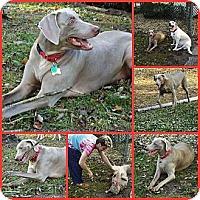Adopt A Pet :: JADE - Inverness, FL