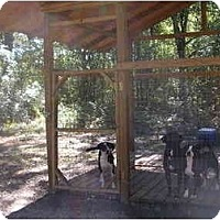 Adopt A Pet :: Ethel - HOBOKEN, GA