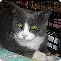 Adopt A Pet :: Serenity - Riverside, RI