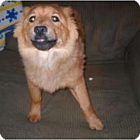Adopt A Pet :: Pumpkin - Glastonbury, CT