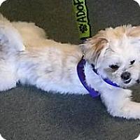 Adopt A Pet :: Kiki - Hastings, NY