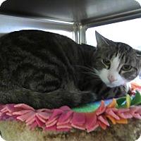 Adopt A Pet :: Owen - St. Louis, MO