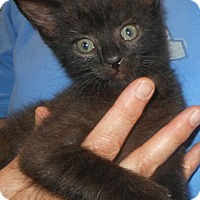 Adopt A Pet :: Mitchell - Reston, VA