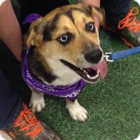 Adopt A Pet :: Trixie - Morgantown, WV
