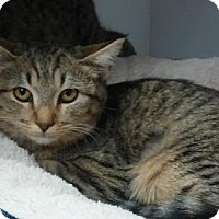 Adopt A Pet :: Elizabeth - Fountain Hills, AZ