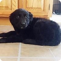 Adopt A Pet :: Patty (ADOPTED) - Burlington, VT