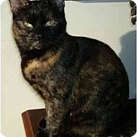 Adopt A Pet :: Charlotte - Reston, VA