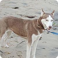 Adopt A Pet :: Ruby - Horsham, PA