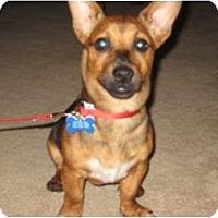 Adopt A Pet :: Oliver - Commerce City, CO