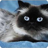 Adopt A Pet :: Princess Diana - Columbus, OH