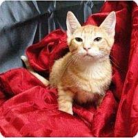 Adopt A Pet :: TIfton - Orlando, FL
