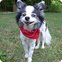 Adopt A Pet :: Faith Ann - Mocksville, NC