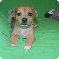 Adopt A Pet :: Max - Hazard, KY