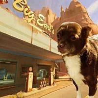 Adopt A Pet :: TAMMY - Fairfield, CA