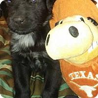Adopt A Pet :: Kasai - Burleson, TX