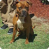 Adopt A Pet :: Solomon - Laplace, LA