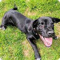 Adopt A Pet :: Rita - Waldorf, MD