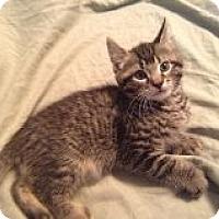 Adopt A Pet :: Nick - Riverside, RI