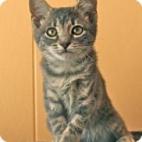 Adopt A Pet :: Mystique - Atlanta, GA