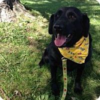 Adopt A Pet :: Simba - Covington, KY