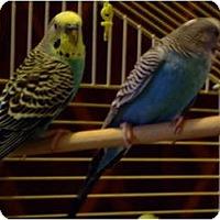 Adopt A Pet :: REX AND RUDY - Mantua, OH