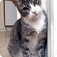 Adopt A Pet :: Nelly - Alexandria, VA