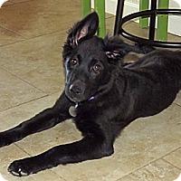 Adopt A Pet :: Pearl - Phoenix, AZ
