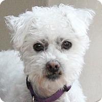 Adopt A Pet :: Peanut - La Costa, CA