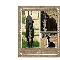 Adopt A Pet :: Betty - Newnan, GA