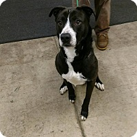 Adopt A Pet :: LAYLA - Sandusky, OH
