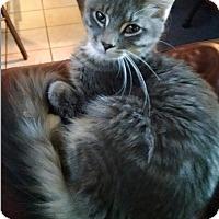 Adopt A Pet :: Evan - Marion, NC