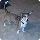 Adopt A Pet :: Bailey (ETAA)