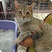 Adopt A Pet :: Eva - Chesapeake, VA
