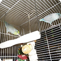 Adopt A Pet :: Cash and Boo - Neenah, WI