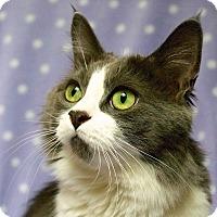 Adopt A Pet :: Monsoon - Calgary, AB