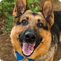 Adopt A Pet :: Sarge*ADOPTION PENDING* - Mill Creek, WA