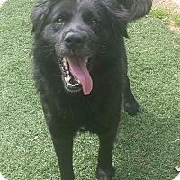 Adopt A Pet :: Duff - Knoxville, TN