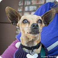 Adopt A Pet :: Sassy - San Marcos, CA
