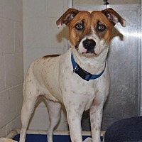 Adopt A Pet :: Savannah - Sunrise Beach, MO