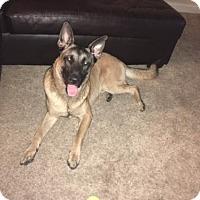 Adopt A Pet :: Penny-16 - Lithia, FL