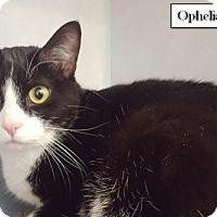 Adopt A Pet :: Ophelia - Lakewood, CO